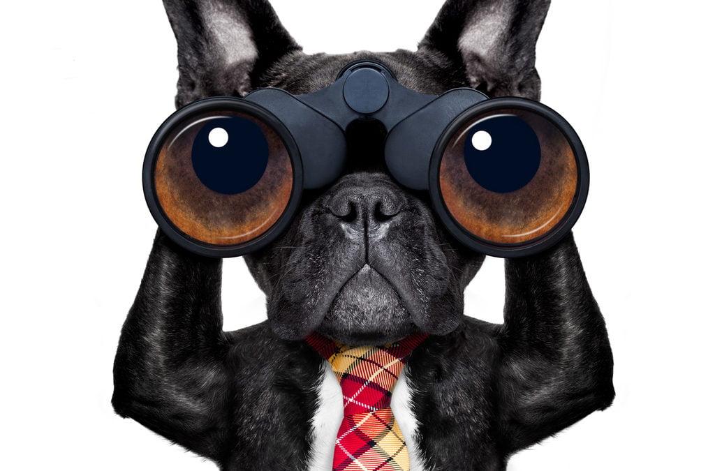Dog-with-binoculars-1024x675