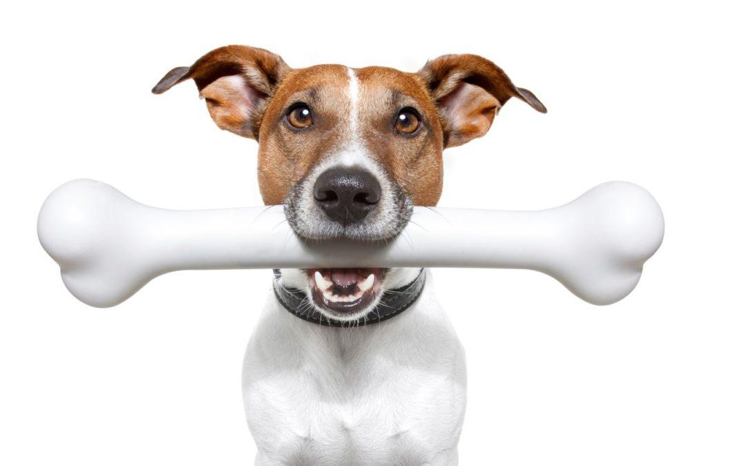 Vulnerability-management-image-dog-with-bone-1080x675